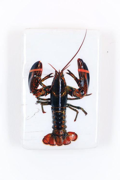 #lobster-o-18x28