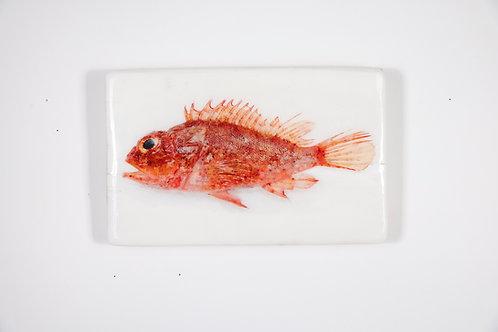 woodentiles.de, fish, reddragonhead, Fisch roter Drachenkopf