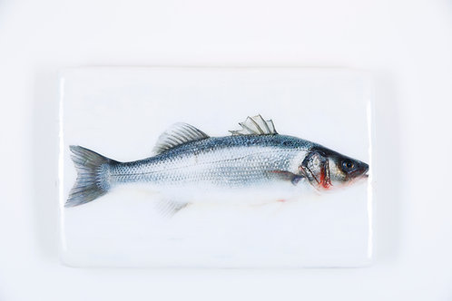 woodentiles.de, fish, rsea bass, Fisch Seebarsch