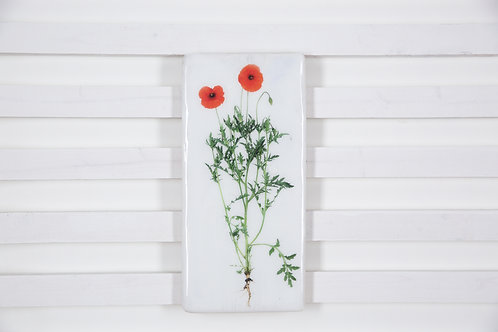 #poppy-19x40