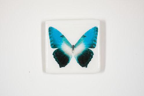 butterfly, Schmetterling hellblau, Epoxi Surface, woodentiles.de