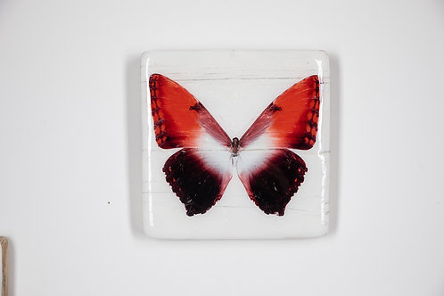butterfly, Schmetterling rot, Epoxi Surface, woodentiles.de