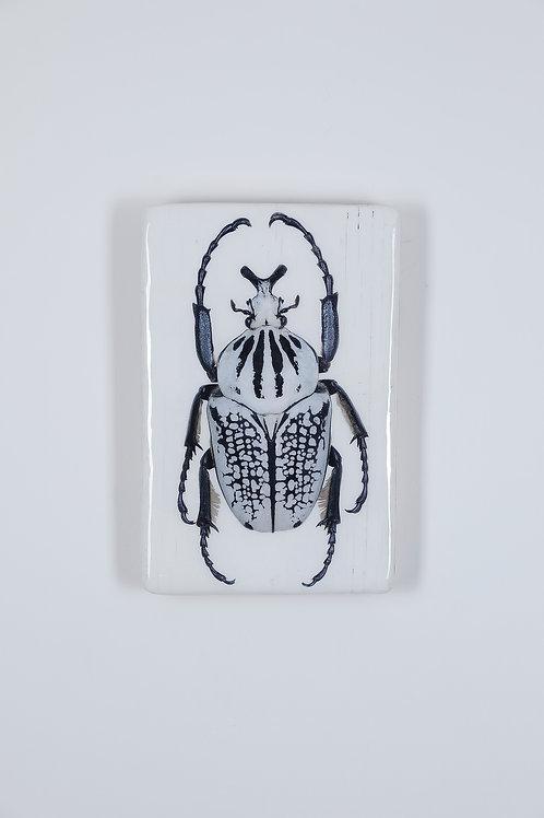 #beetle-02-18x28