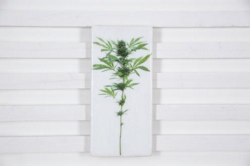 #weedplant-19x40