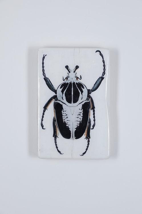 woodentiles.de, beetle, Käfer,  Wall Art