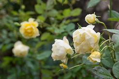 R4C_Rose Baptism-6.jpg