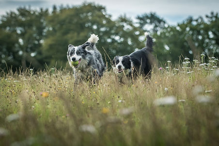 Picture of two dogs enjoying the new forest national park just outside our dog friendly bed and breakfast