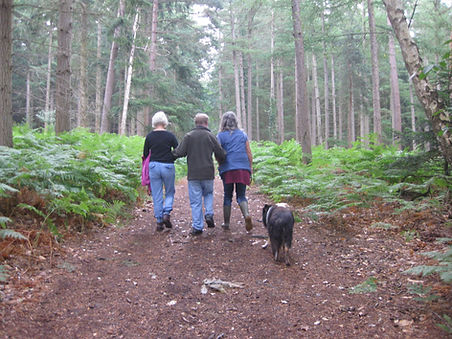 Picture of three people and dogs, walking though the forest enclosures in the New Forest National Park