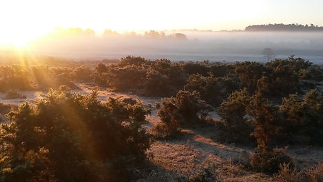 Early morning on southweirs in the New Forest National Park