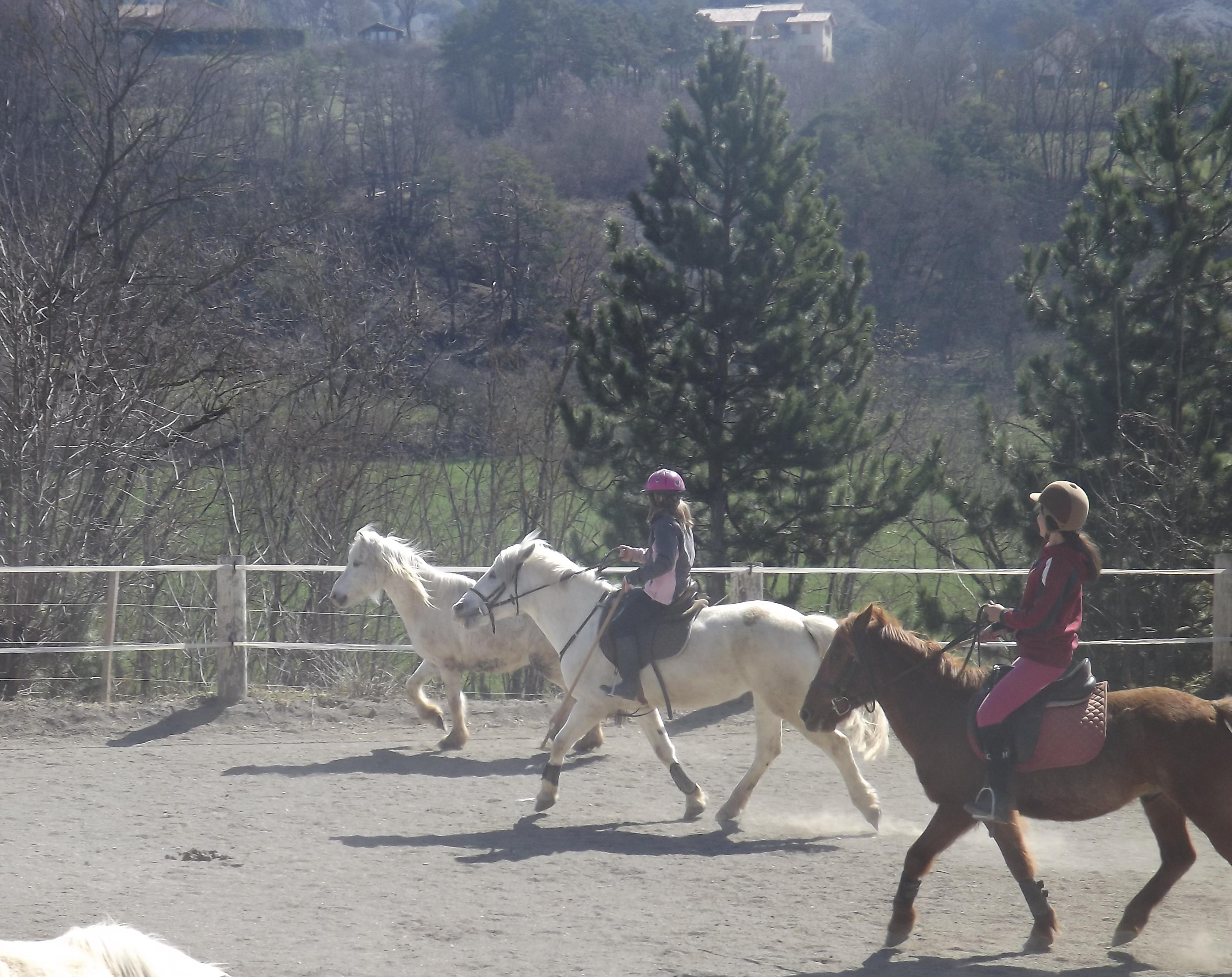 Tri des poneys