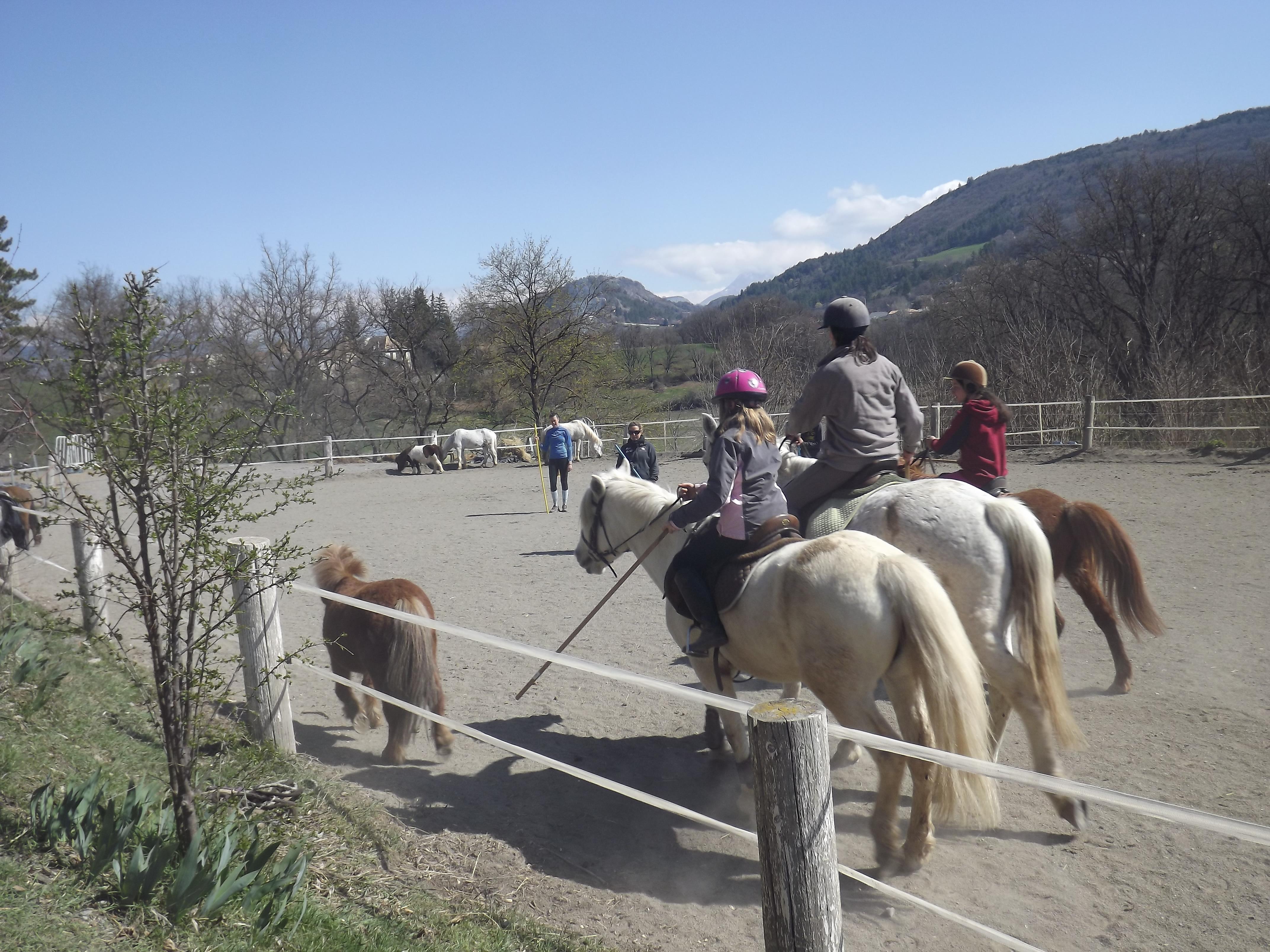 Tri des poneys à 3