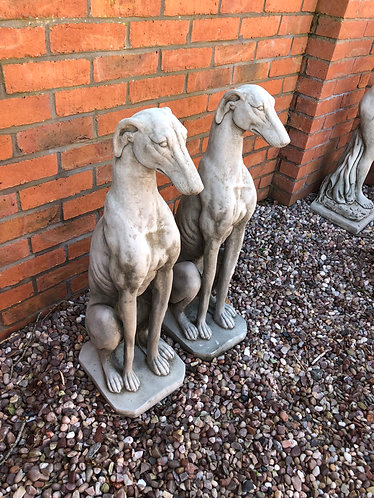 Large Standing Greyhounds