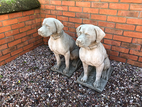 Large Sitting Hunting Dogs