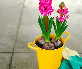 Image of a Flower Pot Plant