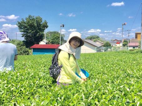 茶摘みに行ってきました(。・ω・。)ノ♡