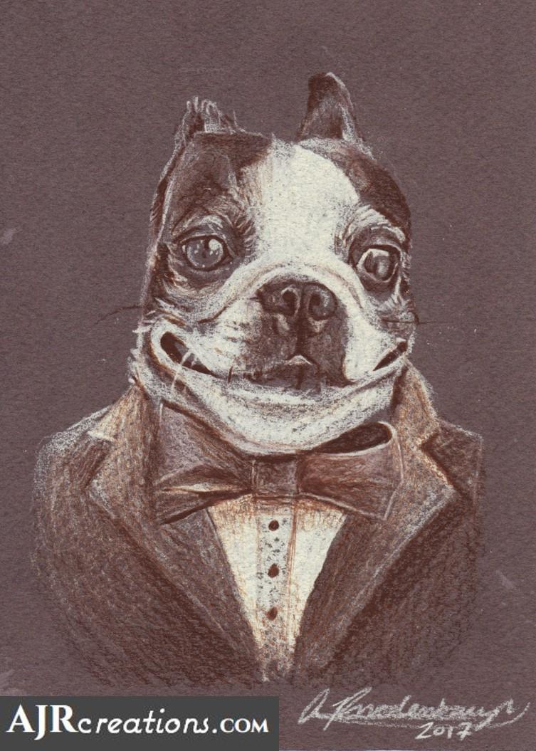 Fancy Terrier