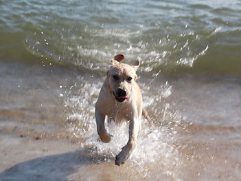 Barnie in the sea.jpg