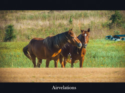 Wild Horses_Copyright