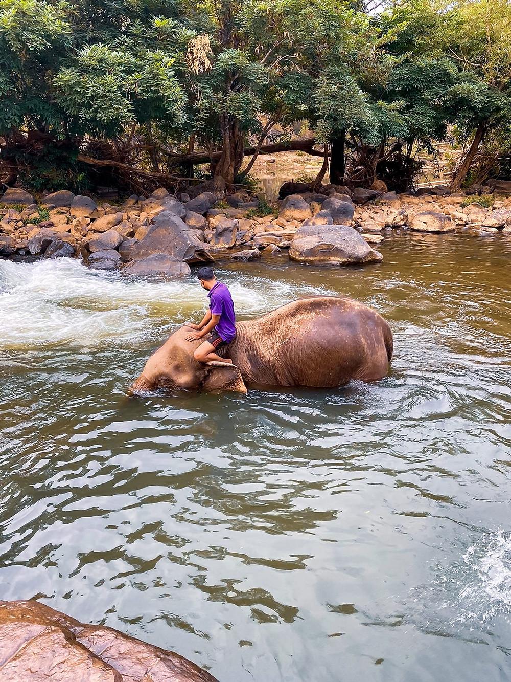 Elephant in Laos - Peeplo Talks - Bawra Musafir