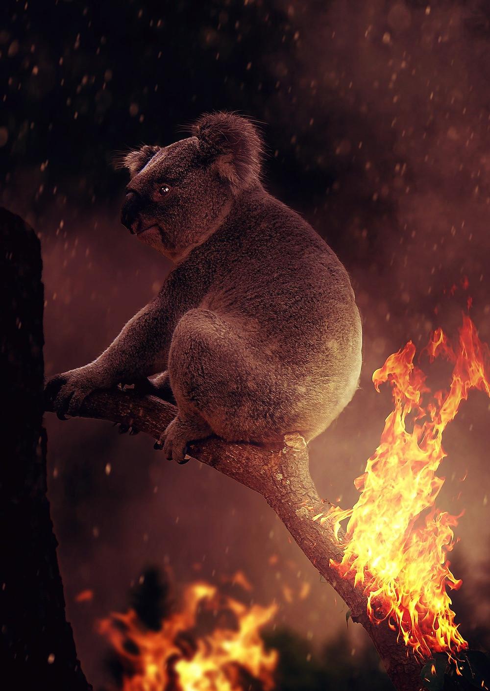bushfire smoke, koalas and bushfire, australian wildlife and bushfires, wild life casualties from australian bushfire,detox from bushfire smoke, coping with bushfire smoke, canberra doula, canberra air quality, worst air quality in the world, australia burns