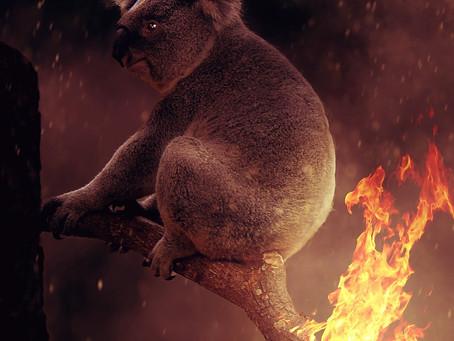 Bushfire Smoke What Can You Do? - Canberra Doula & Energy Healer