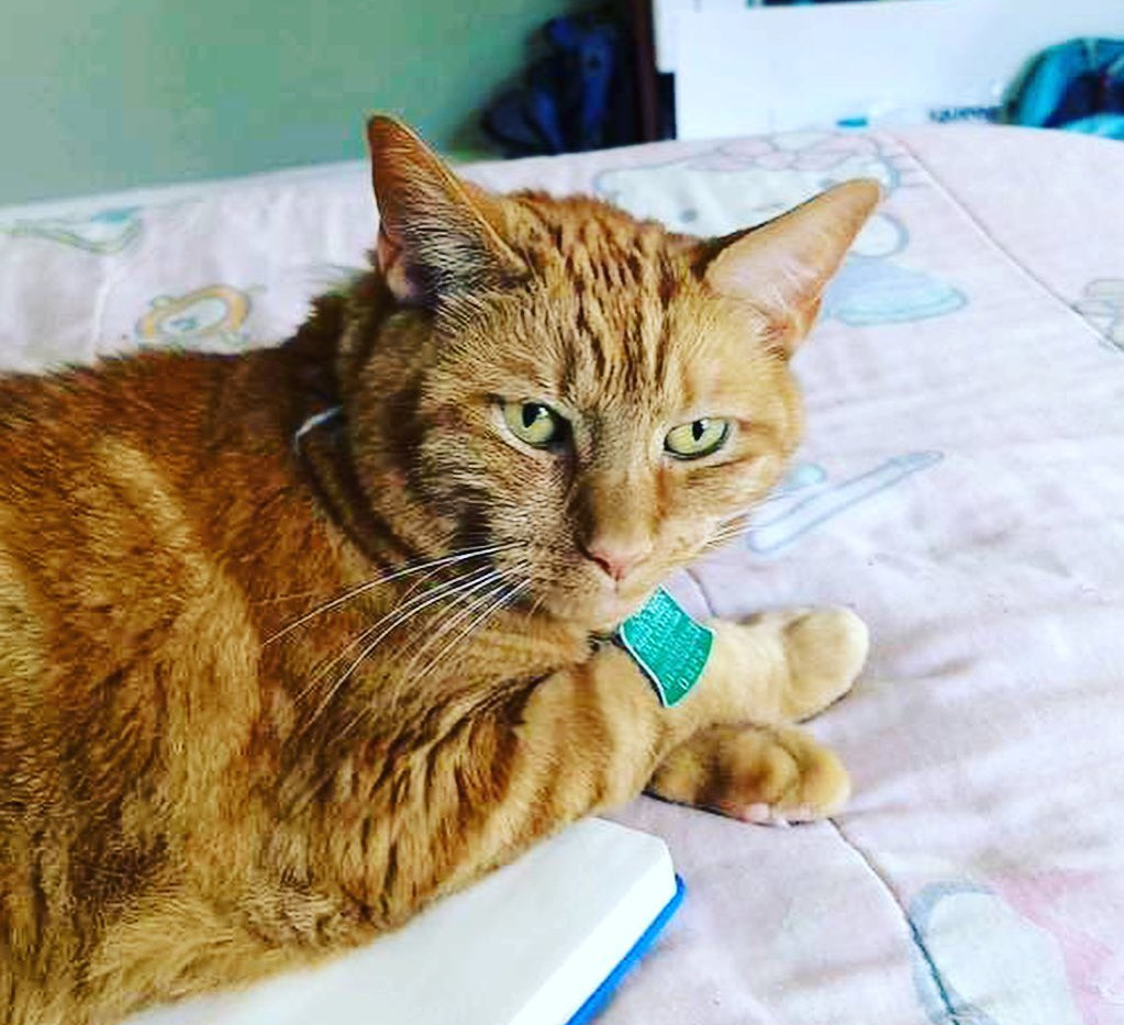 A CRECHE House cat