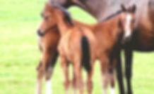 Training of Foals