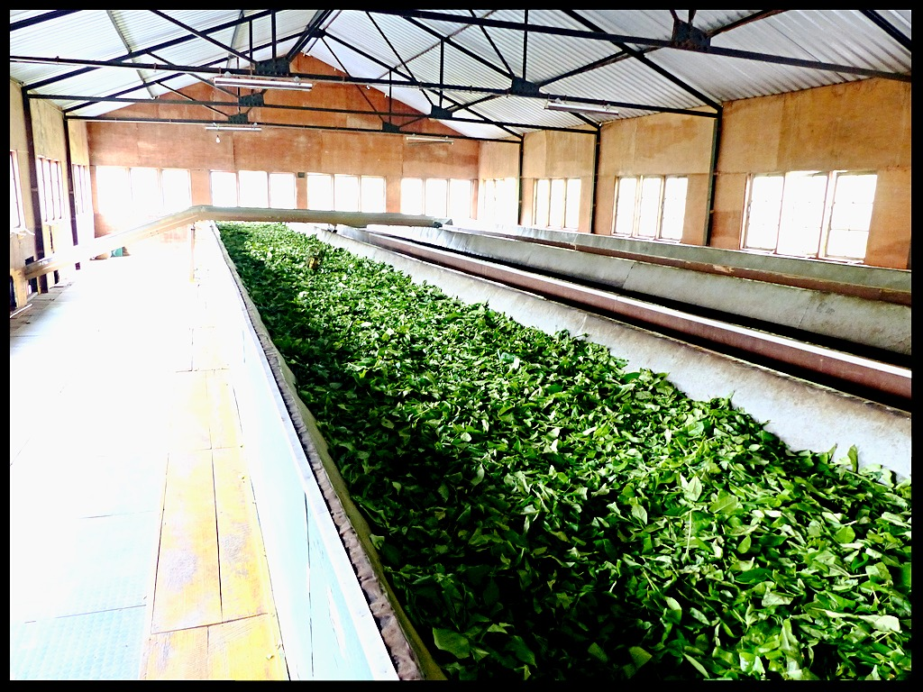 Glenloch Teafactory
