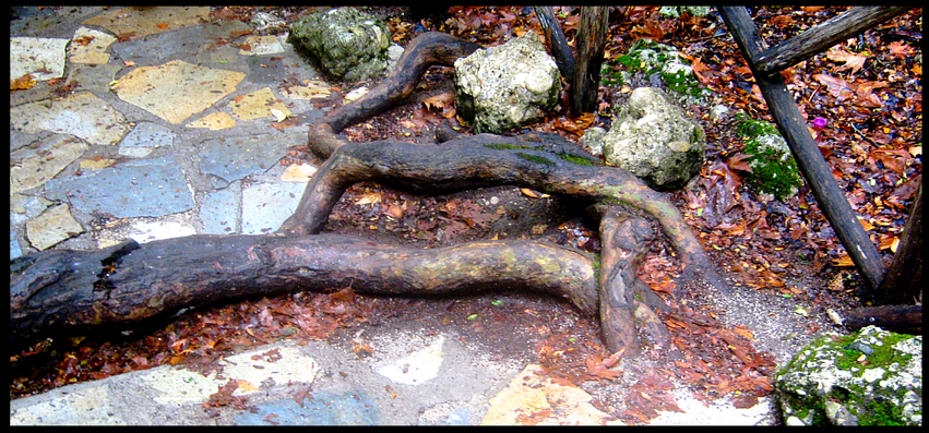Root of the Valley