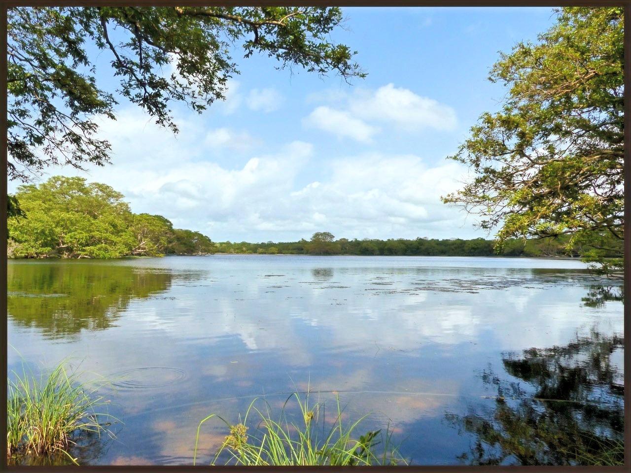 Lake Wilpattu