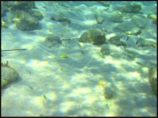 Hammamet Beach-Underwater