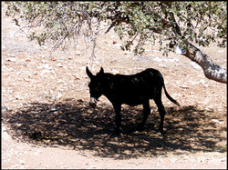 Donkey, Vatouthkia Restaurant