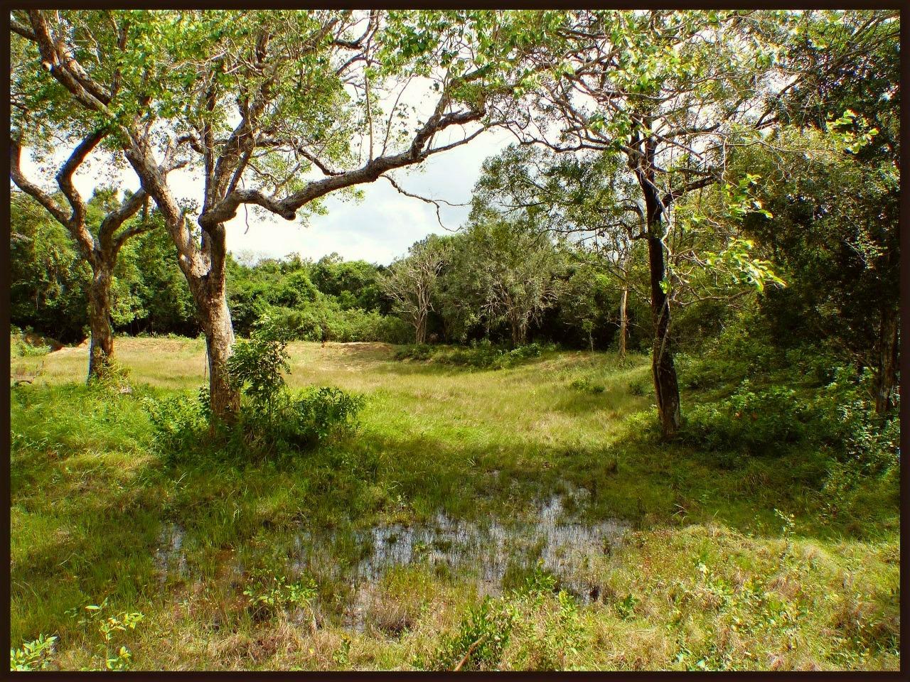 Landscape Wilpattu