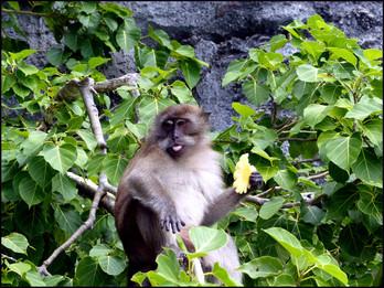 8th Day: Maya Bay & more of Phi Phi Island