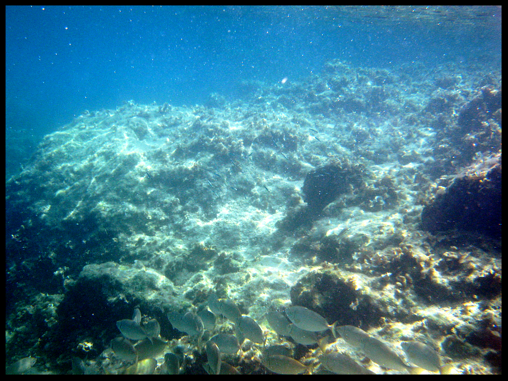 Ladiko Beach-Snorkeling