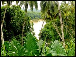 Road to Pinnawala