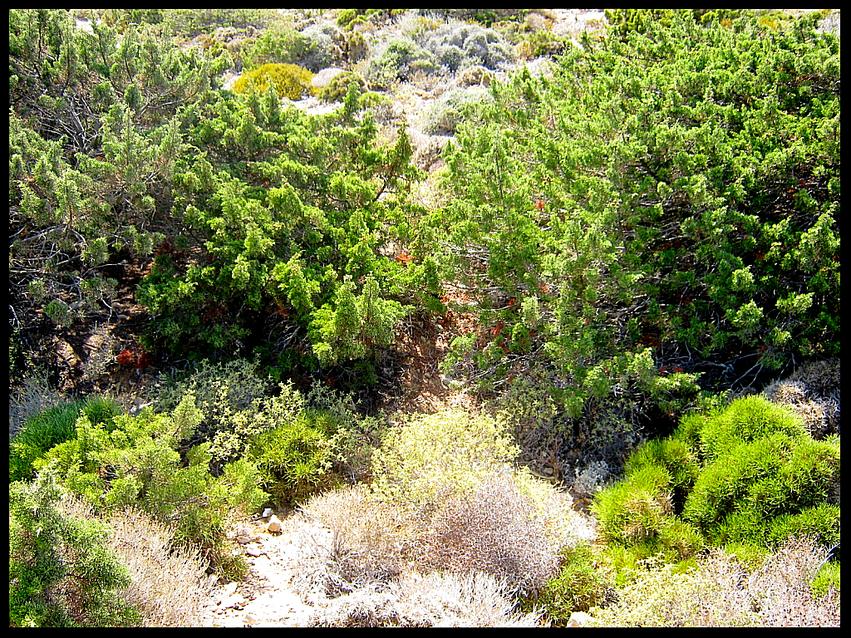 Rivetina balcanica, Habitat
