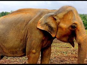 5th Day: Temple of Buddha & Tea...free the elephants