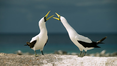 Courtship