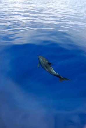Dolphin_Corrected01.jpg