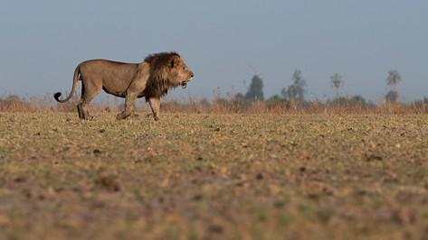 Kalahari Desert Botswana.