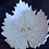 Thumbnail: Vine Leaf - Feuille de vigne
