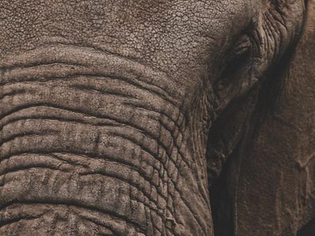 Safári online: será que os animais africanos estão  protegidos durante a quarentena? Como ajudar?
