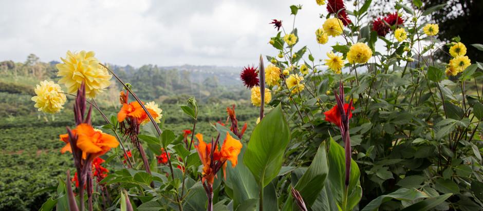 Costa Rican Getaway