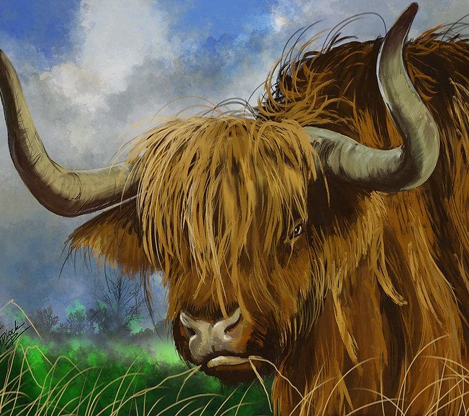 highland-bull-SM.jpg