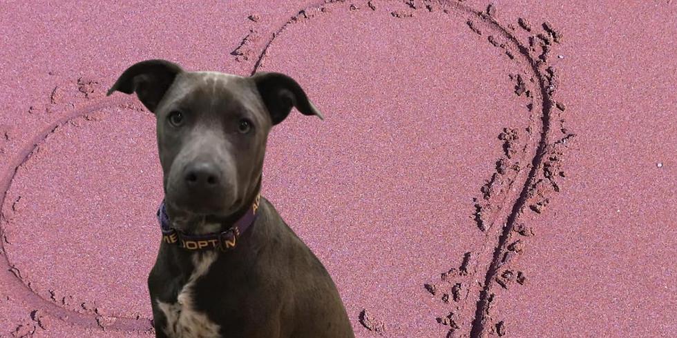 Love Pawty & Dog/Puppy Adoption Event