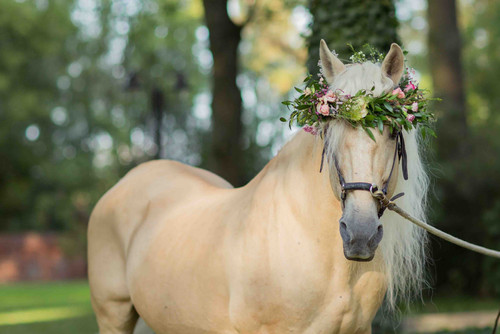 Horse in a flower crown