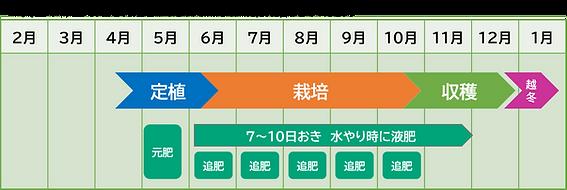 青パパイヤ_コンテナ栽培作型表