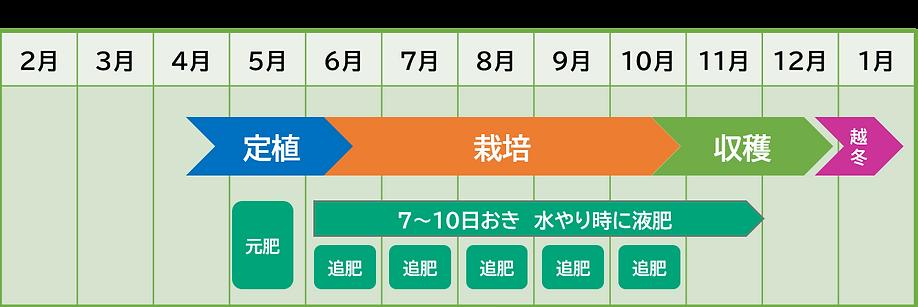 青パパイヤ 栽培カレンダー コンテナ栽培