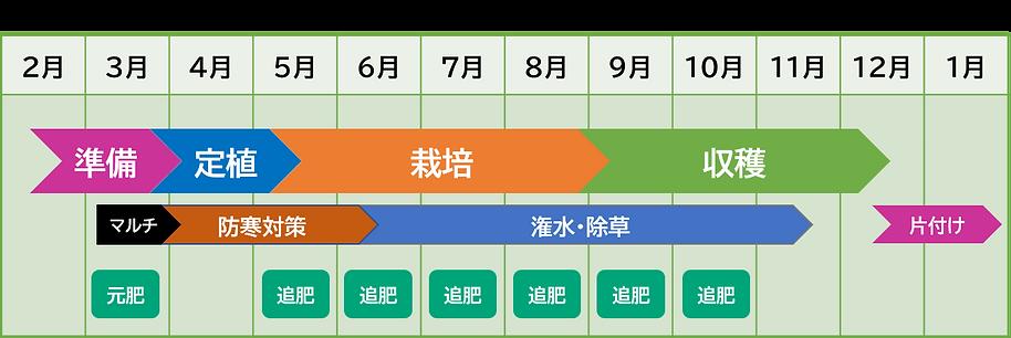 青パパイヤ 栽培カレンダー 営利栽培 本州標準